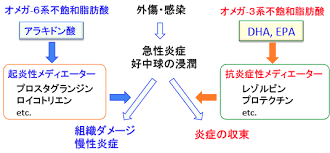 n-3系不飽和脂肪酸由来エイコサノイドの抗炎症作用を示す図