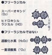 過酸化水素と一重項酸素はフリーラジカルでないことを説明する図