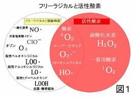 フリーラジカルと活性酸素の分類図