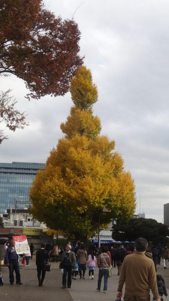 銀杏の葉がきれいに色づいている上野の森