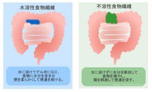 排便促進作用の説明図