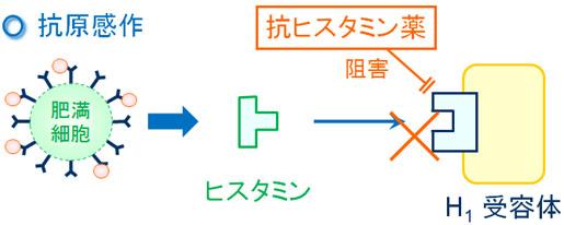 ヒスタミンH1受容体拮抗薬の作用機序を示す図