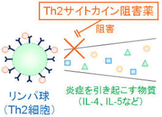 Th2サイトカイン阻害薬の作用機序を示す図