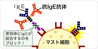 オマリズマブ 抗IgE抗体の作用機序についてまとめた図