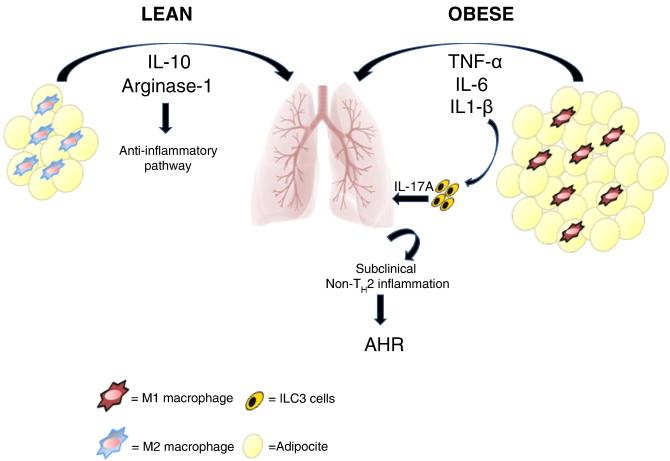肥満喘息へのPAI-1 TNF-αの関与を示す図