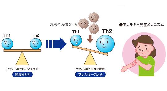 Th1とTh2のバランスが悪くなるとアレルギー反応が起こることを示す図