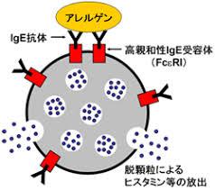アレルギー反応に関与する因子