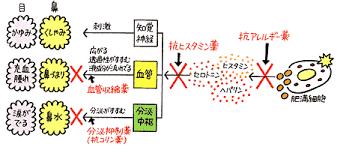 抗アレルギー薬の作用の仕方を示した図