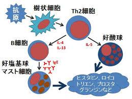好酸球がアレルギー反応で特異顆粒タンパクを分泌することを示した図