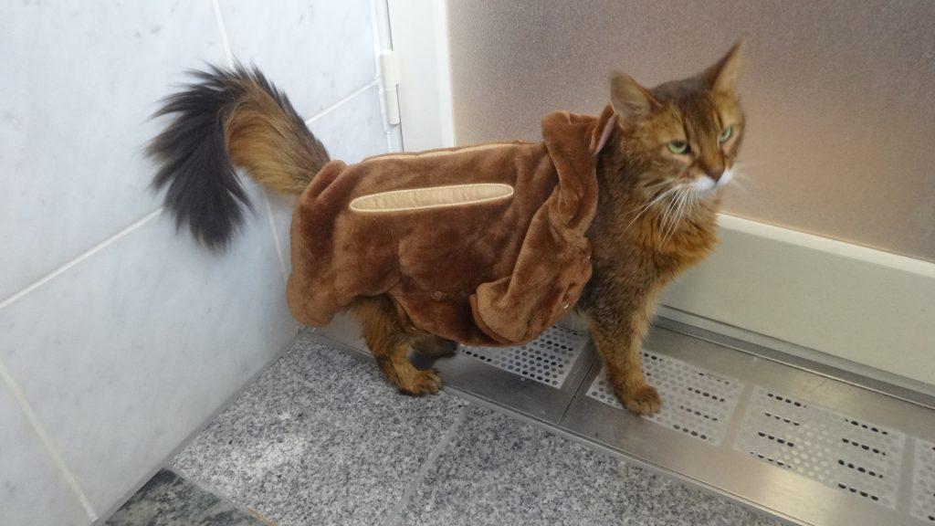 風呂場からでたがるローズ