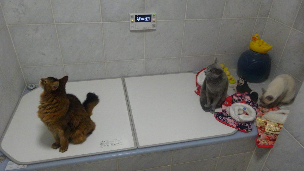 お風呂場にいる3匹とコスプレの衣装