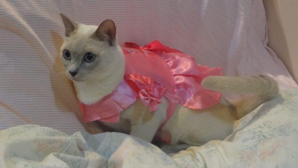 ドレス姿の楓