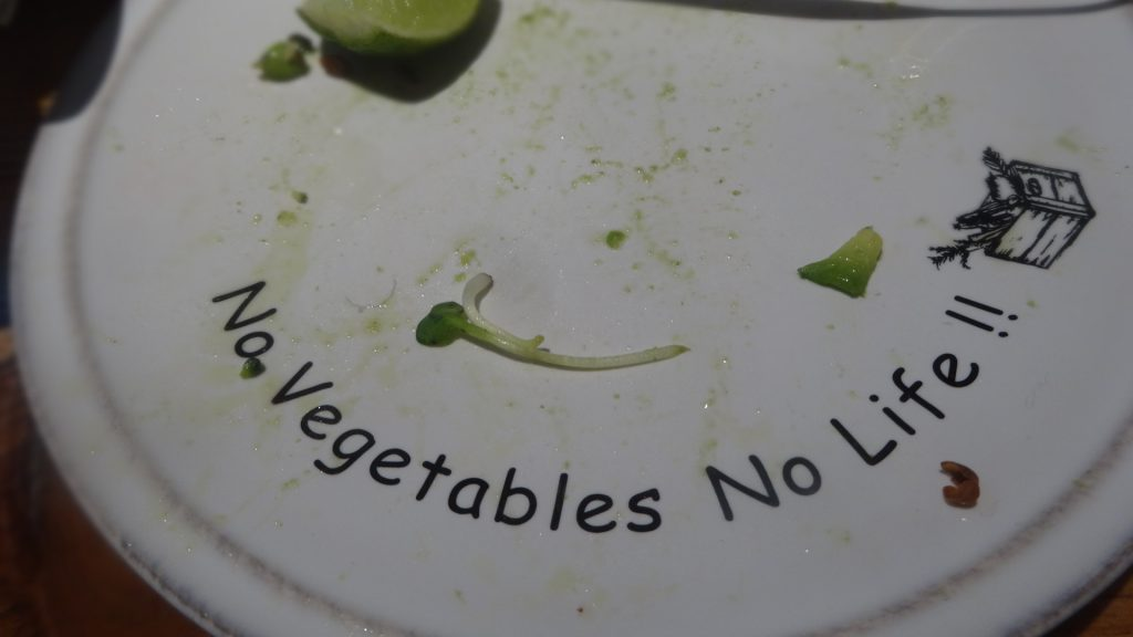 No Vegetables No Life !! と書かれたお皿