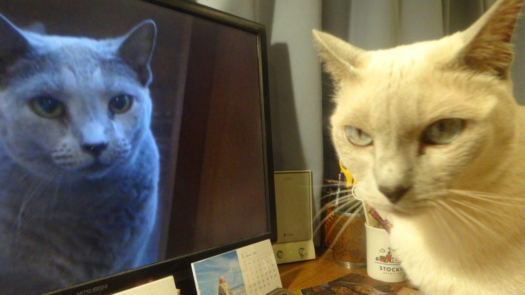 デイジーが映ったコンピュータのデイスプレイを見る楓