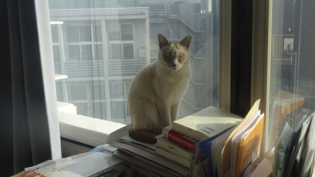 窓際でひとりで日光浴する楓