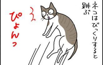 驚いて飛び上がるネコ