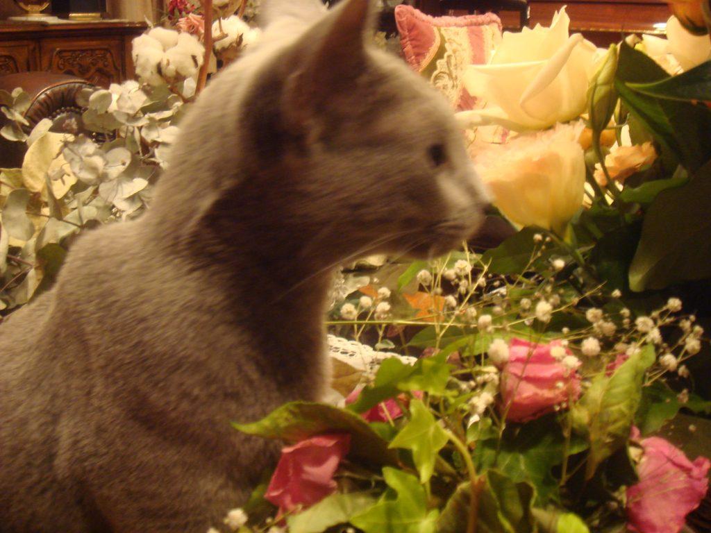 花を齧るデイジー1