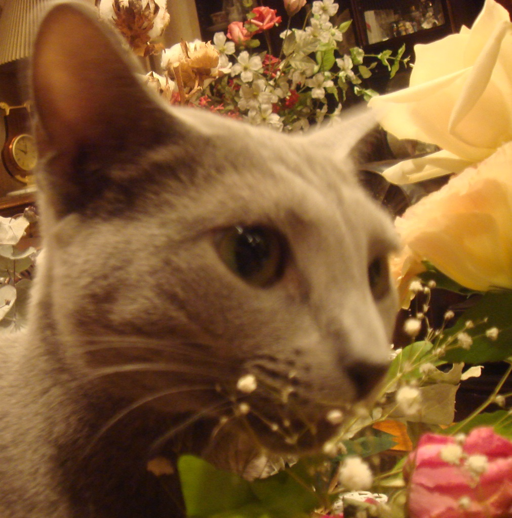 花を齧るデイジー2