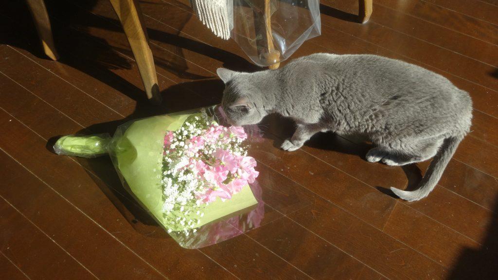 花束をのぞきこむデイジー