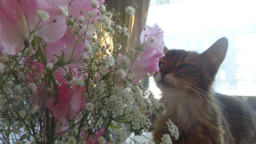 花束を齧るローズ1