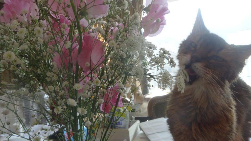 花束を齧るローズ2
