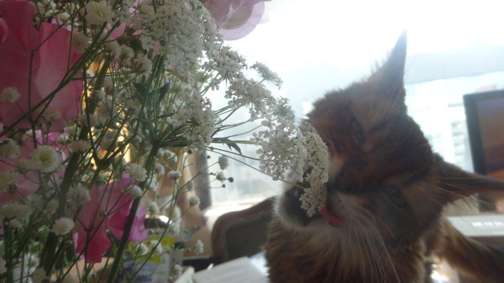 花束を齧るローズ3