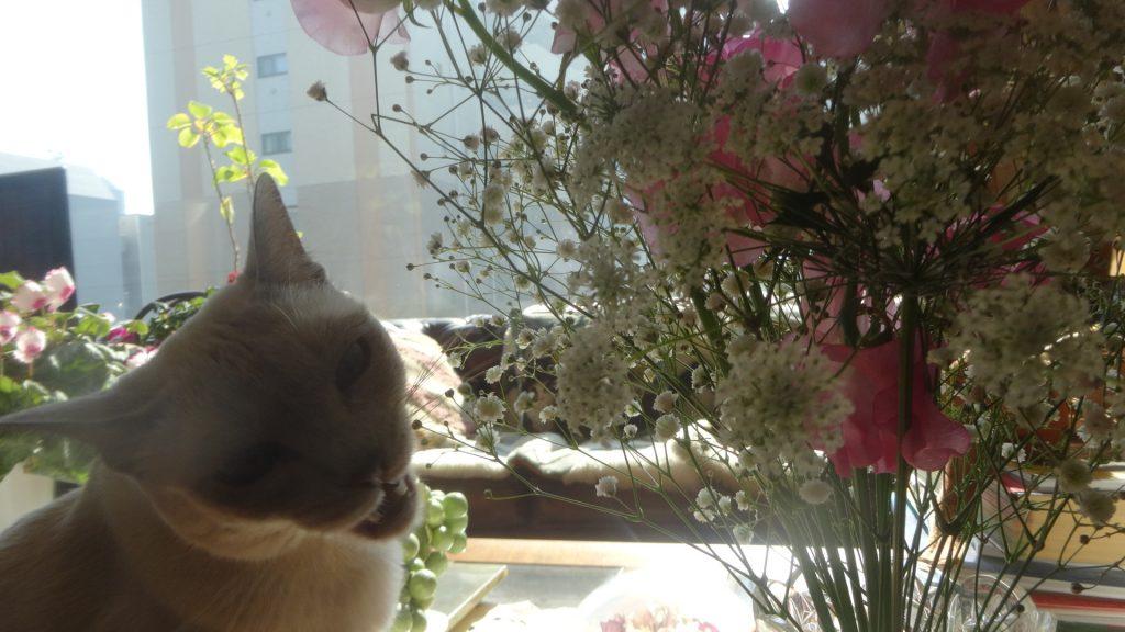大口を開けて花束を齧る楓