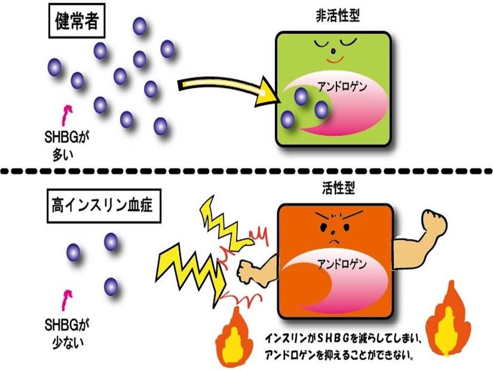肥満とアンドロゲン SHBGの関係を示した図