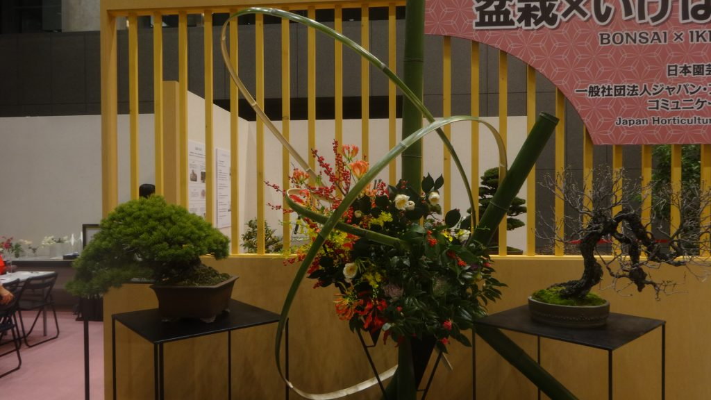 大きな見事な盆栽