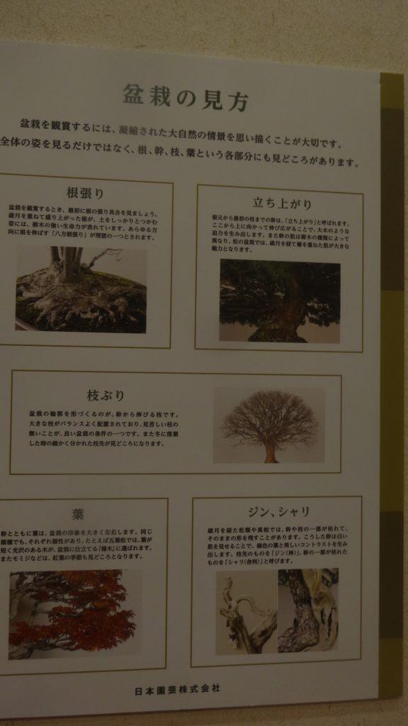 盆栽の見方の解説