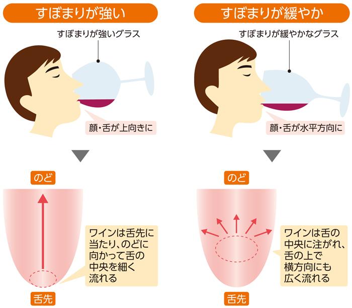 飲むときの頭の傾け方と口の中でのワインの広がり方の関係を示した図
