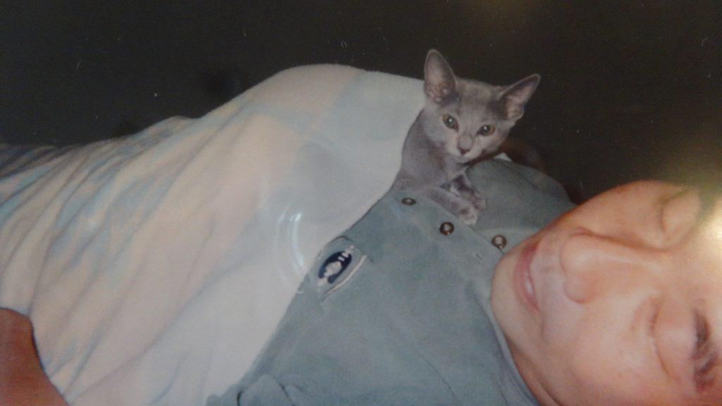 書き手の上で寝る子猫の頃のデイジー