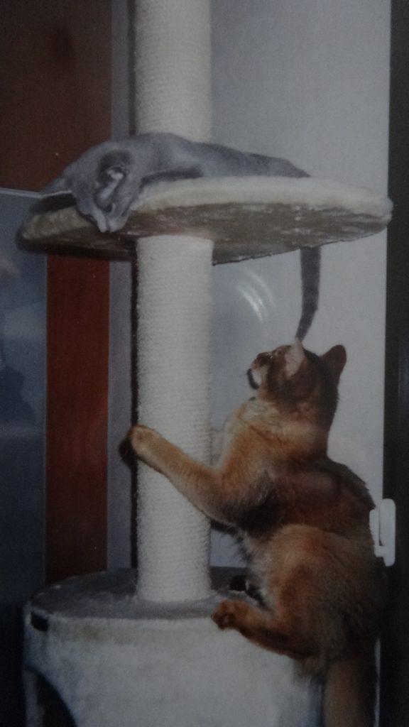 じゃれあう子猫の頃のローズとデイジー
