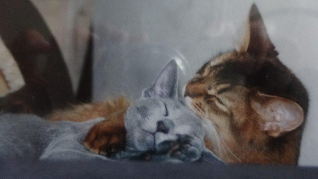 舐めあう子猫の頃のローズとデイジー