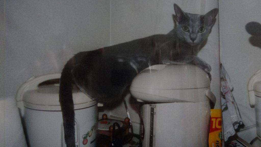 ポットと炊飯器の上に寝るデイジー