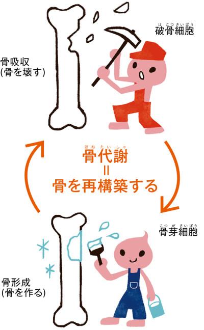 骨芽細胞 破骨細胞による骨代謝を説明した図