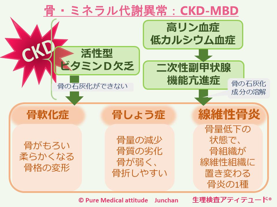 CKDで骨・ミネラル代謝異常が生じるメカニズムの解説図