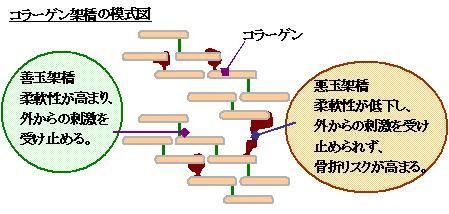 生理的なコラーゲン架橋と 善玉・悪玉架橋の説明図