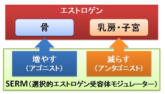 SERMの骨 骨以外への作用を示す図1