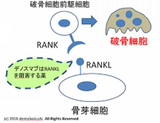 デノスマブの作用機序の説明図