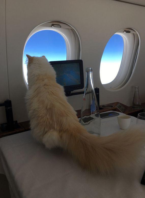 ジェット機の窓から外を眺めるシュペットちゃん