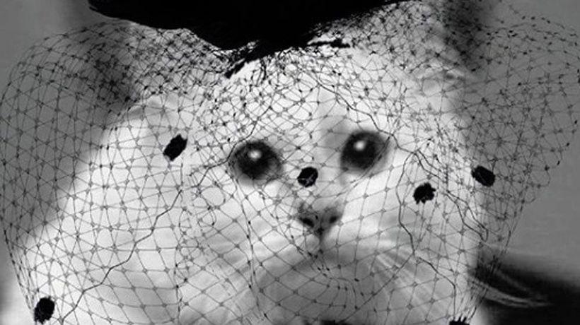 黒いネットをかぶったシュペットちゃん