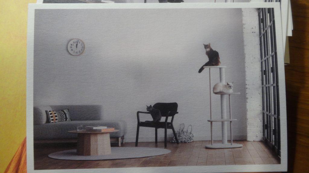 カリモクさんのキャットツリーの宣伝写真に出た我が家のネコs