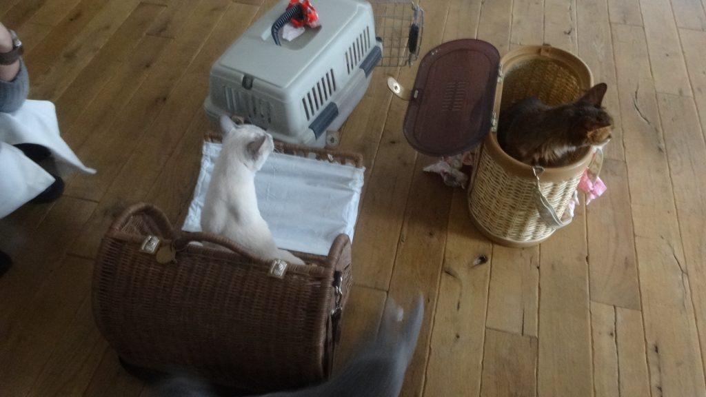 周囲をうかがうネコたち