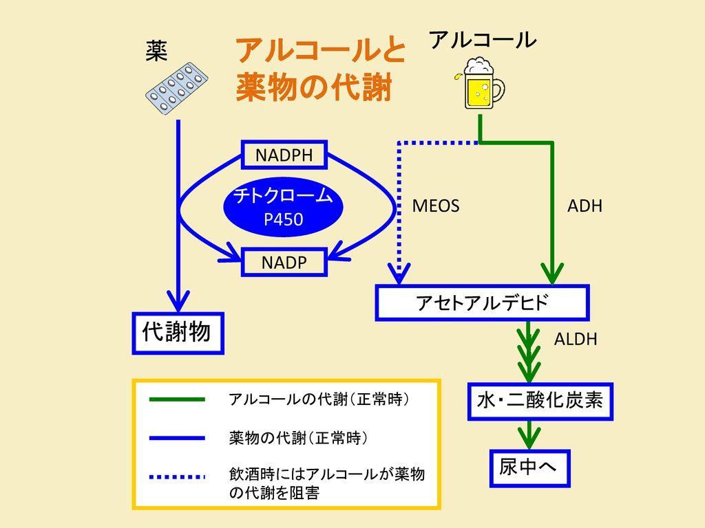 MEOSによるアルコール代謝