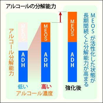 MEOSの増強とアルコール耐性の関連