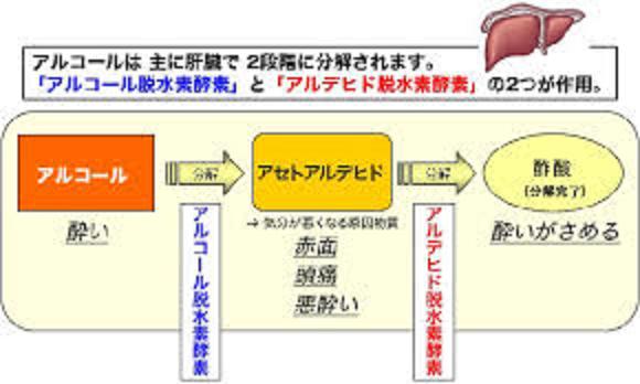 アルコール代謝とアルコール脱水素酵素・ADH アルデヒド脱水素酵素・ALDH