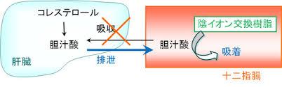 陰イオン交換樹脂(レジン)の作用機序の図説