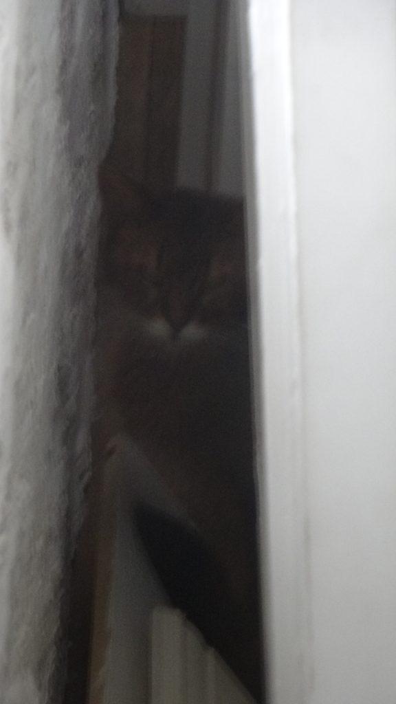 部屋の隅に隠れるローズ