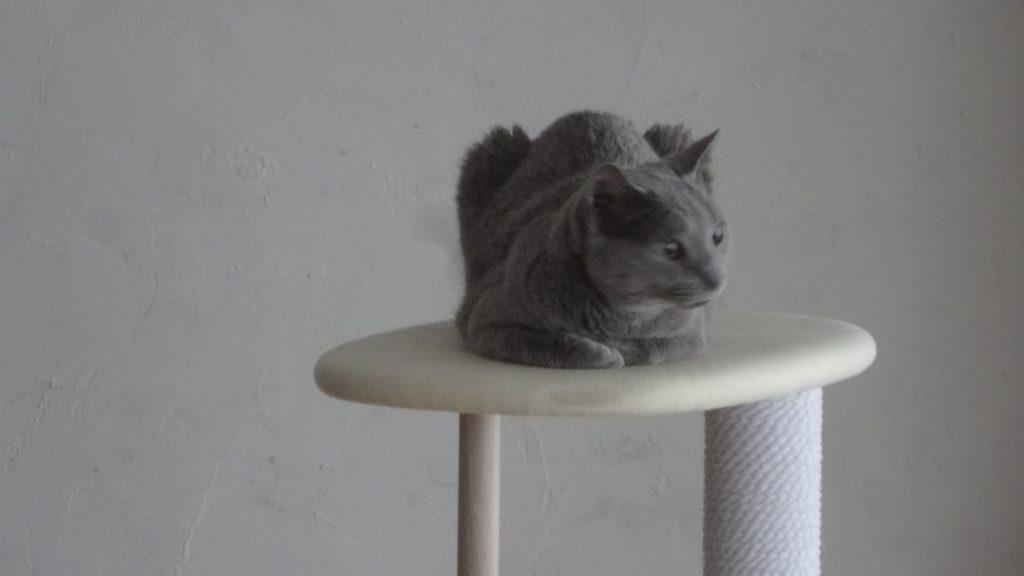 ツリーの上で座るデイジー